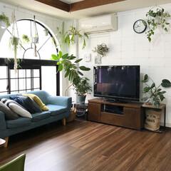 植物のある暮らし/リビング/リビングインテリア/ボタニカル/DIY/雑貨/... いい天気なので無印のラグをとっぱらって洗…