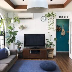 インテリア/DIY/漆喰壁/ブロック壁/植物のある暮らし/グリーンのある暮らし/... ドアの奥にみえるターコイズブルーの壁は自…