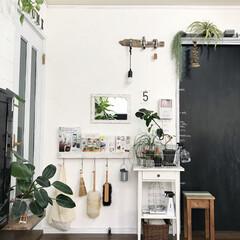 グリーンのある暮らし/植物/観葉植物/植物のある暮らし/DIY/雑貨/... ダイソーの250円商品の鏡をリメイクして…