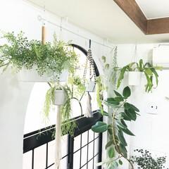 植物のある暮らし/グリーンのある暮らし/フェイクグリーン/観葉植物/植物/グリーン/... 窓際のハンギングプランター(^^) 手前…