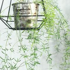 イケア/鉢/錆び加工/DIY/インテリア ハンギングしながら飾っている植物(^ ^…