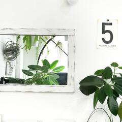 グリーンインテリア/植物のある暮らし/植物/グリーンのある暮らし/DIY/雑貨/... 壁に飾ったリメイクしたダイソーの鏡(^ …