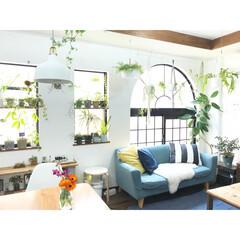 植物のある暮らし/観葉植物/植物/グリーン/DIY/雑貨/... リビングの写真です(^^) 息子が幼稚園…