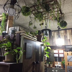 賃貸/フェイクグリーン/観葉植物/インテリア/キッチン 我が家のキッチンは、観葉植物とフェイクグ…