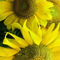 夏/猛暑/ガーデニング/花 久々に投稿。 近くに🌻植えてありました。…