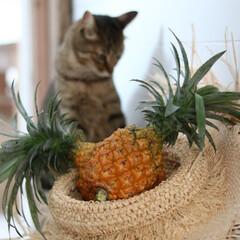 パイナップル/夏のインテリア/果物/フルーツ パイナップルって可愛い♪だから我が家では…