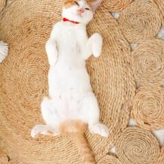 仰向け/寝相/ねこ/ネコ/猫 「おい!その寝かた!」って突っ込みたくな…