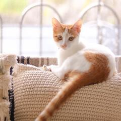 cat/ねこ/猫/外のスズメ/対決 見返りにゃー♪外にスズメが電線に止まって…
