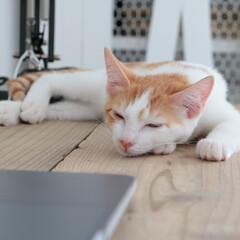 猫/cat/白目/半目/寝る うとうと白目ココちゃん。まだ小さいからな…