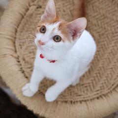 cat/猫/甘え上手/甘え おやつが食べたい時のココ。 いつもより甘…