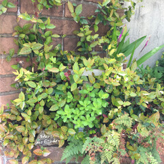garden いろんな緑色