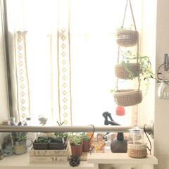 グリーン/ボタニカル 緑が増えた窓ぎわになりました(^-^) …