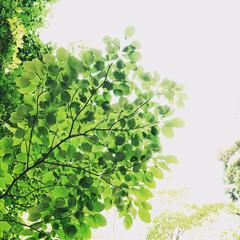 グリーン 初夏のグリーン