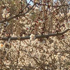 暖かい市街/あたたかい日/暖かい日/可愛い花/はなびら/花びら/... こんばんは(o^^o) いつもありがとう…