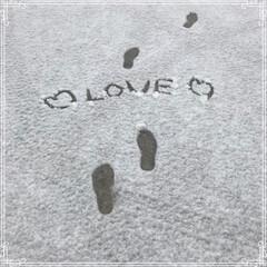 雪/ぼたん雪/牡丹雪/バスの道/路線バス/大きな道/... こんにちは(o^^o) いつもありがとう…