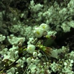 初年度/spring/スプリング/ハッピースプリング/春/夜桜/... こんばんは(o^^o) いつもありがとう…