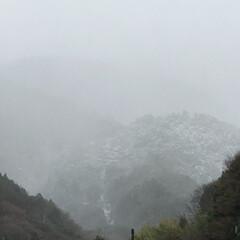 見頃/おかめ桜/桜/寒い/にょきにょき/土筆にょきにょき/... こんにちは(o^^o) いつもありがとう…