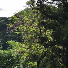 綺麗/咲く/風景/夏/春/夏の日/... こんばんは(o^^o) いつもありがとう…