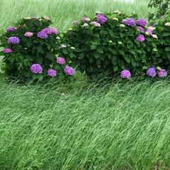 風情/可愛い花/綺麗な花/真夏/そそっかしい/動きやすい/... こんにちは(o^^o) いつもありがとう…