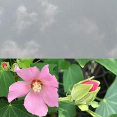花/空の写真/ハンドタオル/屋外/外出/動きやすい/... こんにちは(o^^o) いつもありがとう…