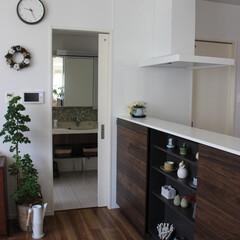 おうち自慢/カフェ風インテリア/緑のある暮らし/回遊できる間取り/洗面/キッチン/... 我が家のキッチンダイニングはお風呂、洗面…