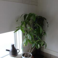 おうち自慢/風水/インテリア/玄関/地窓/緑のある暮らし わたしのおうち♬  玄関には運を運び込む…