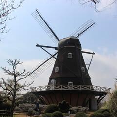 公園/お花見/ピクニック/風車/桜/春の一枚 春の一枚  船橋アンデルセン公園へお出か…