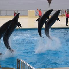 わたしのGW/水族館/イルカのショー/イルカ/福岡県/観光 九州の海の中道水族館にて  イルカのショ…