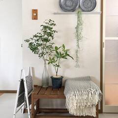 boho/スカンジナビアンインテリア/インテリアと植物/受賞/北欧インテリア/ニトリ/... この写真で、Green Snapの「植物…