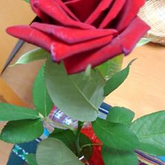 「ついに薔薇を買いました❗しばらくぶりだっ…」(1枚目)