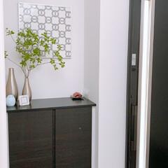 玄関収納/玄関インテリア/グリーンのある暮らし/すっきり暮らす/整理収納アドバイザー 今日の玄関です😊  腰高の靴箱の上は鍵や…