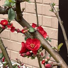 「最近の我が家のお花達!  水仙が2種類、…」(4枚目)