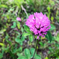 植物/草花/アリ/フォト/スマホ撮影/スマホ写真/... 草花とアリ♡