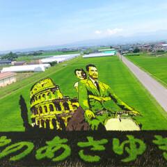 お出かけ/ドライブ/青森県/田舎館村田んぼアート/田んぼアート 青森県田舎館村の田んぼアートを見に行って…