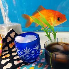 金魚/水槽/ガラス/食器/アイスコーヒー/コーヒー/... アイスコーヒーと金魚ちゃんの納涼会♡ 子…