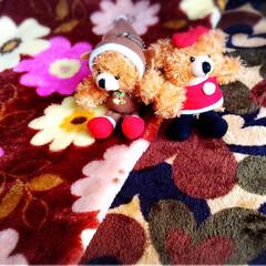 クリスマス/サンタ/くま/マスコット/トナカイ/コスプレ/... くまの〜♡トナカイ♡サンタガール♡