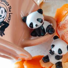雑貨大好き/コーヒー/コーヒードリッパー/陶器/パンダ/ディズニーグッズ/... パンダ大好き🐼 陶器のミニパンダは仲良し…