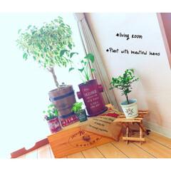 四人家族/3LDK/賃貸マンション/観葉植物/リビング/グリーン/... 観葉植物♥︎
