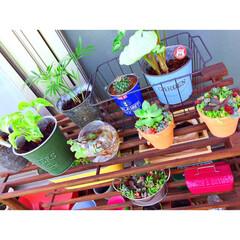 観葉植物/ガーデニング初心者/ガーデン雑貨/ベランダガーデン/多肉植物初心者/多肉植物寄せ植え/... 多肉植物寄せ植え仲間入り♥︎