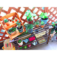 グリーンのある暮らし/ガーデニング初心者/ガーデン雑貨/ベランダガーデン/多肉植物/観葉植物/...