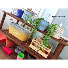 多肉植物/観葉植物/ガーデニング初心者/グリーンネックレス/グリーン/DIY/... グリーンネックレス♥︎ いっぱい届いたし…