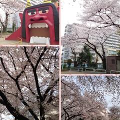 花見/桜/カフェ こんばんは🌙今日は予報どおりの曇り空そし…(3枚目)