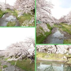 花見/桜/カフェ こんばんは🌙今日は予報どおりの曇り空そし…(4枚目)