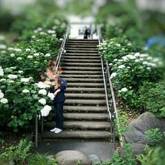 郷土の森/滝/平日/紫陽花 旦那さんが平日休みが取れたので 朝TV📺…(1枚目)