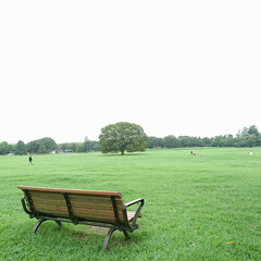 キバナコスモス/百日紅/いつもの公園/おでかけワンショット 涼しさに誘われて いつもの公園へ久しぶり…