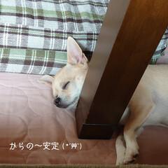 チキンタツタ/ハンバーガー/シェイク/腕枕/ハル 週末のお昼は楽しみにしていた( ੭ ˙ᗜ…(4枚目)
