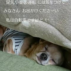 お出かけ/雨/LIMIAペット同好会/ペット/犬 おはようございます 雨降り二日目の朝(^…