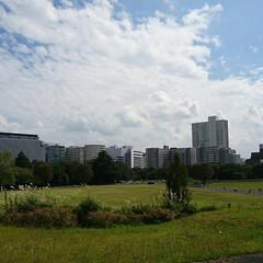 小さな芽/桜/駅周辺/高層ビル/庭/秋の空/... 先日 近所の公園で桜の木が老木で幹が空洞…(4枚目)