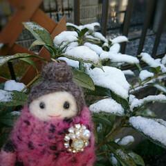 今朝/雪/紅子さん おはようございます 昨日は⛄❄️の心配か…