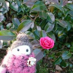 仏手柑/冬支度/紅子さん/いつもの公園 いつもの公園🚲💨 紅子さんと椿 ハイチー…